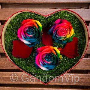 گل رز جاودان هفت رنگ