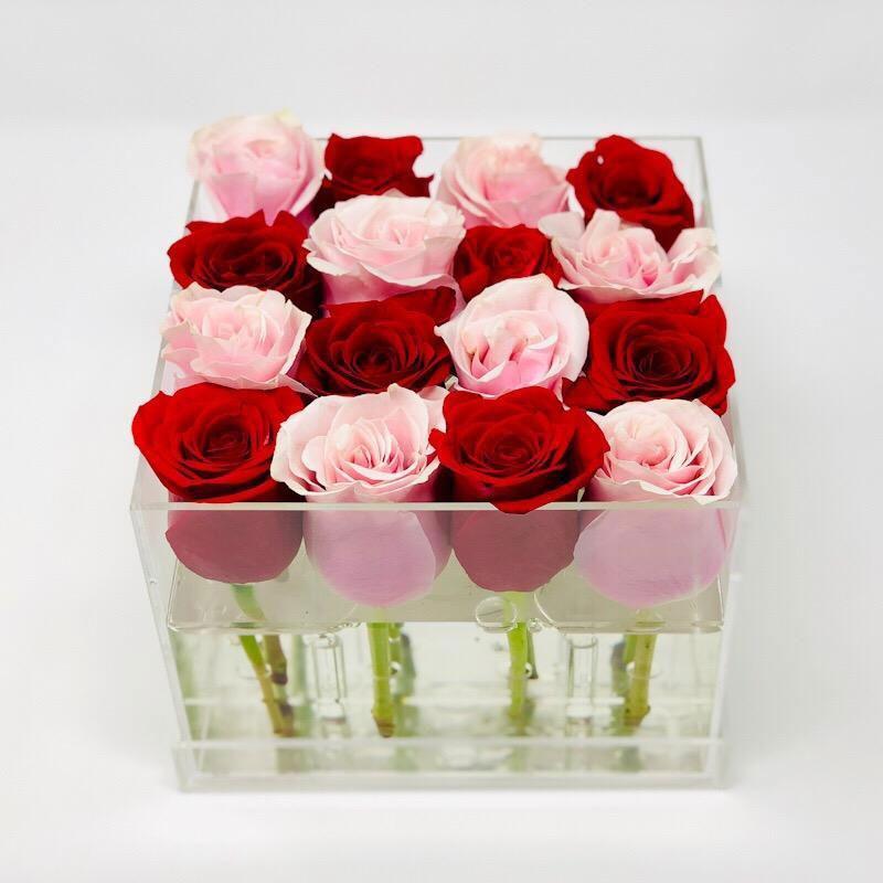 گل رز مدرن