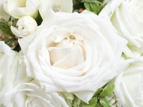 تعبیر خواب گل سفید