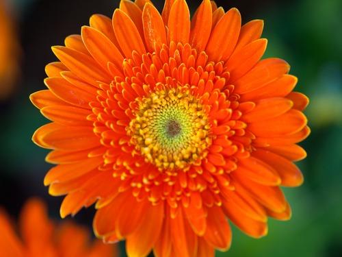 تعبیر خواب گل نارنجی