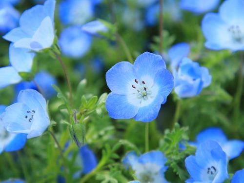 تعبیر خواب گل آبی