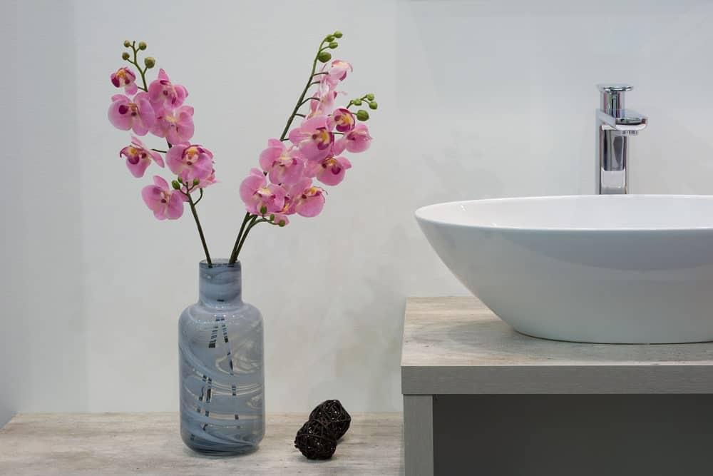 گیاهان و گل های بدون نیاز به نور