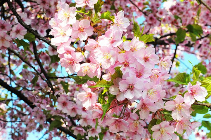 گل های چهار فصل