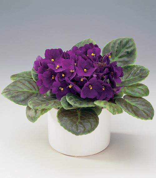 انواع مختلف گل های مناسب چهار فصل