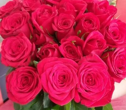 فضای مناسب برای کاشتن گل رزهلندی