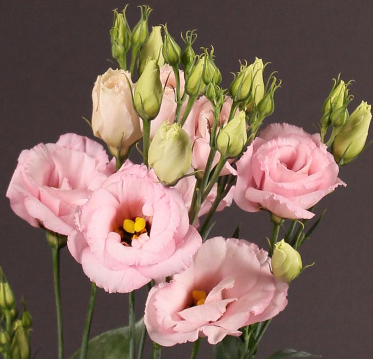 گلدان گل لیسیانتوس