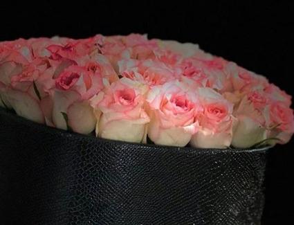 نور مورد نیاز گل رز هلندی