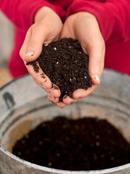 خاک مورد نیاز گل میخک