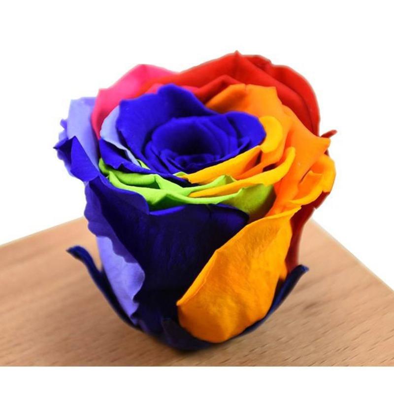 انواع گل رز هلندی