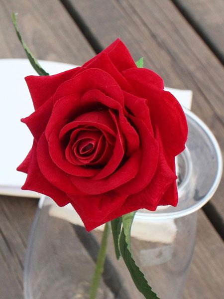 گل رز پیوندی