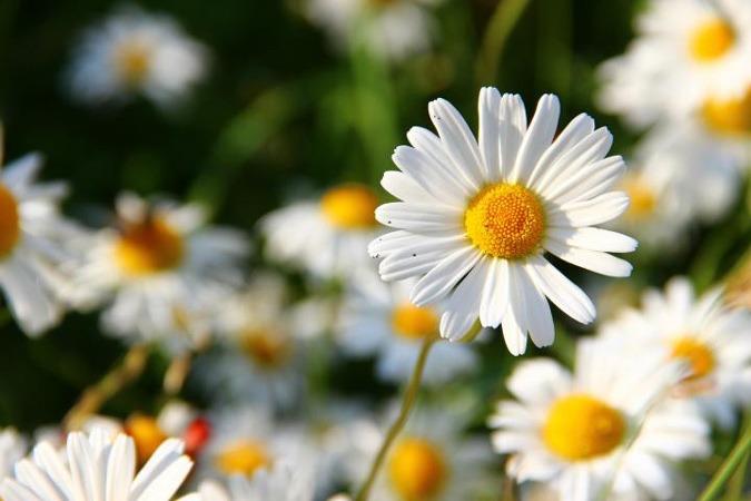 گل ماه تولد اردیبهشت چیست