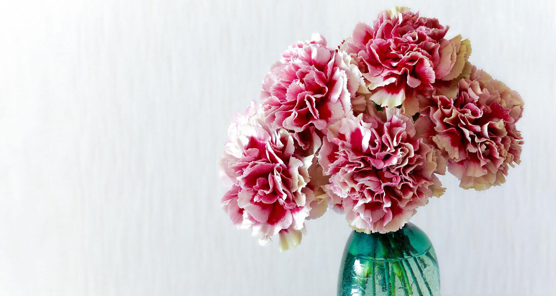 گل میخک هدیه روز مادر
