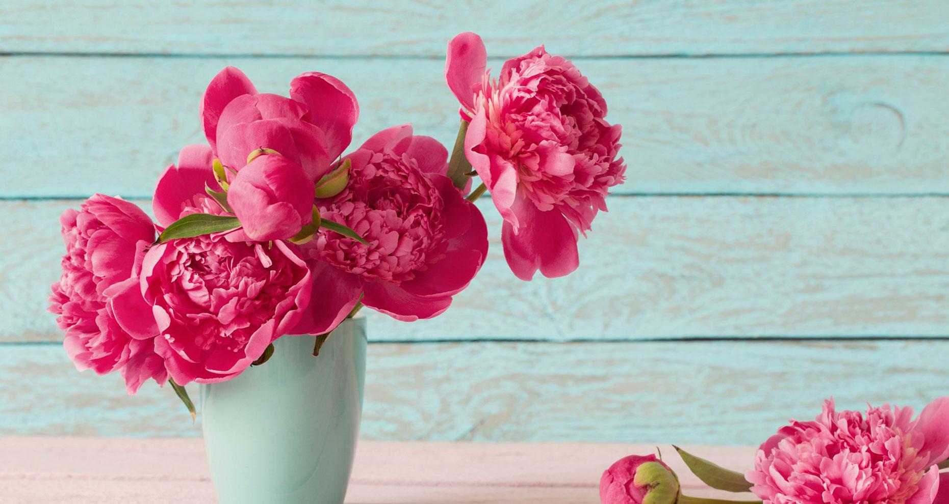 گل صدتومنی هدیه روز مادر