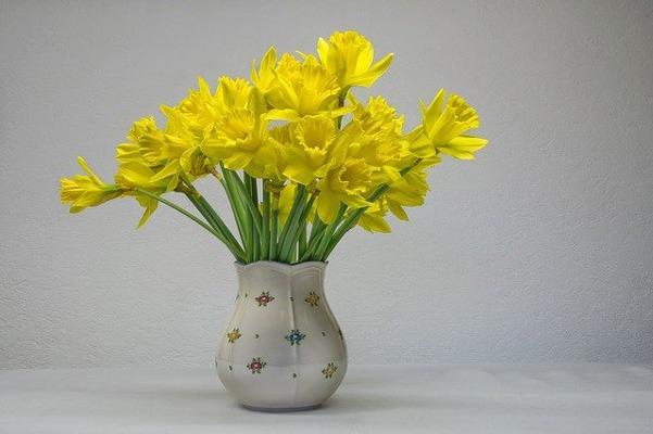 گل CROCUS