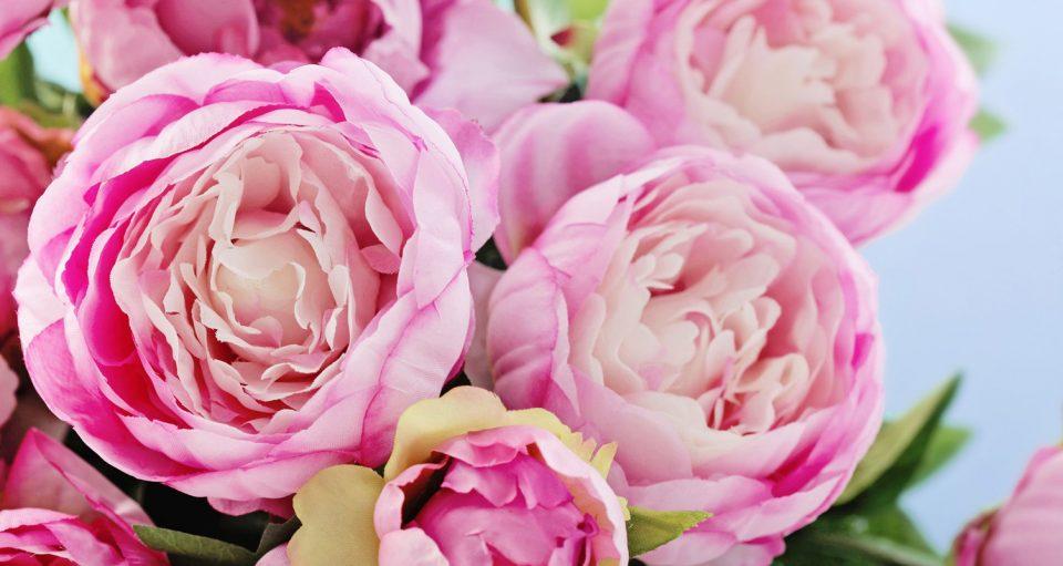 5 گل مشهور برای هدیه روز مادر را بشناسید