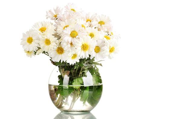گل Daisies