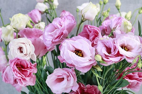 گل لیسیانتوس روز مادر