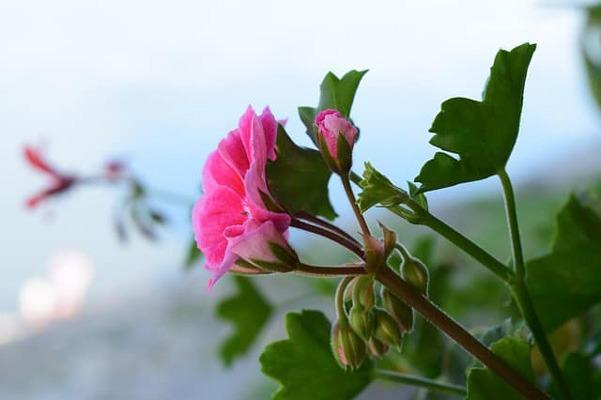 DAFFODILS (گل نرگس)