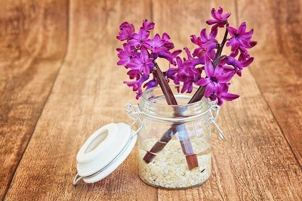 (GERANIUMS (PELARGONIUM یا گل شمعدانی