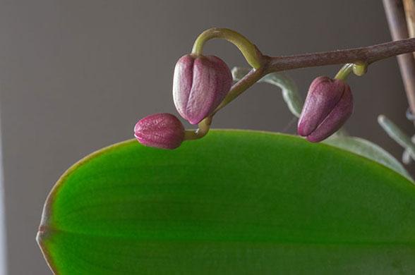 نگهداری از گل ارکیده