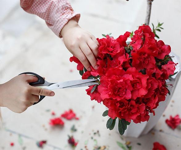 هرس گل آزالیا