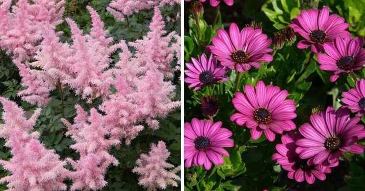 16 تا از بهترین گل ها برای خشک کردن