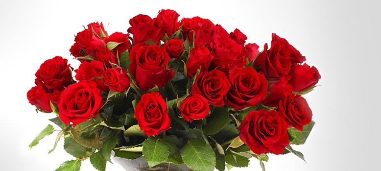 معنای تعداد گل های رز دسته گل برای ولنتاین