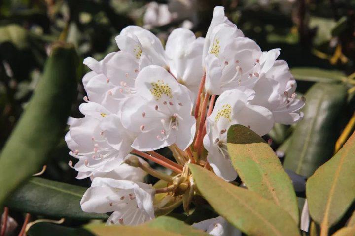 درختچه گلدار برای باغچه