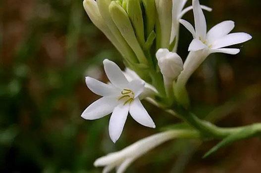 خوشبوترین گل ها