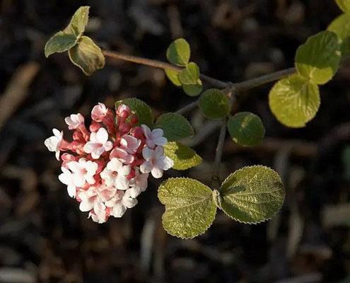 معطرترین گل ها