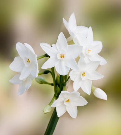 معطرترین گل ها | خوشبوترین گل ها