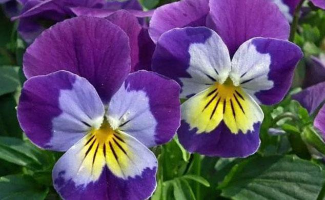 گل و گیاه مناسب برای بالکن