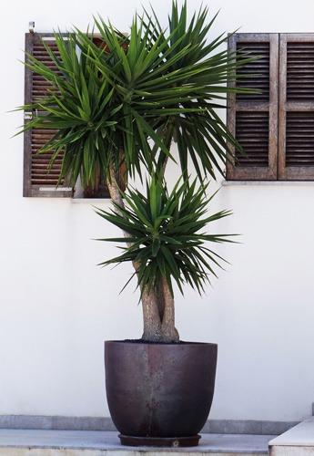 گیاه مناسب برای گلدان بلند