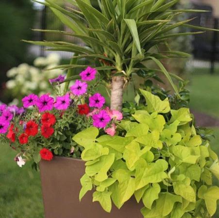 نحوه کاشت گل در گلدان