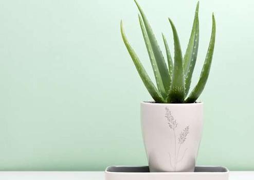 گیاه مناسب برای اتاق خواب