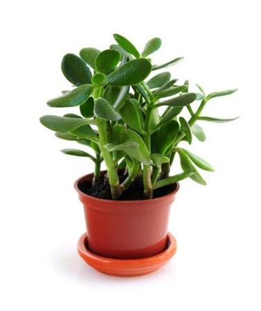 گیاهان آپارتمانی مقاوم به کم آبی