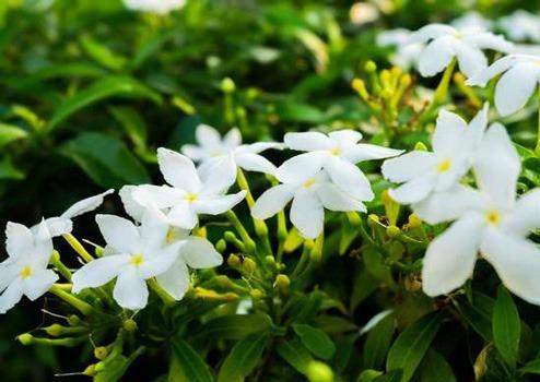 گل و گیاه مناسب برای اتاق خواب شما