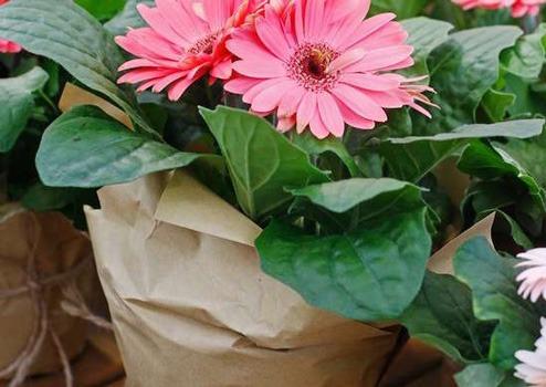 گل و گیاه مناسب برای اتاق خواب