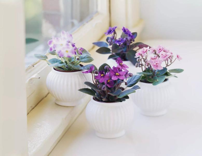 گیاه خانگی گلدار