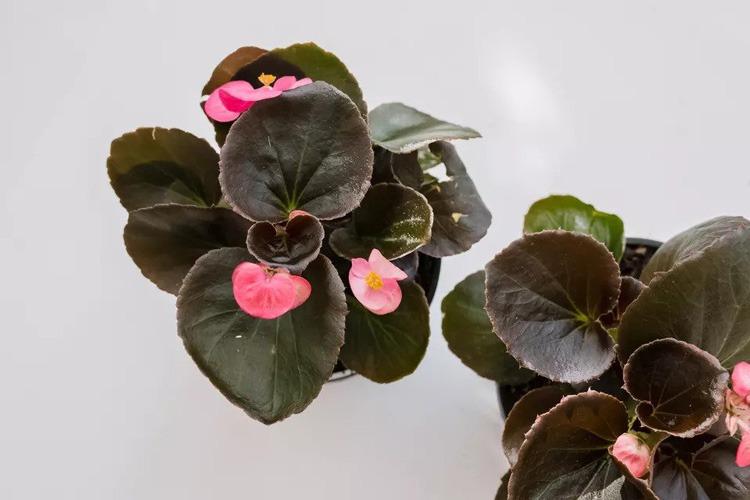 8 گیاه خانگی گلدار