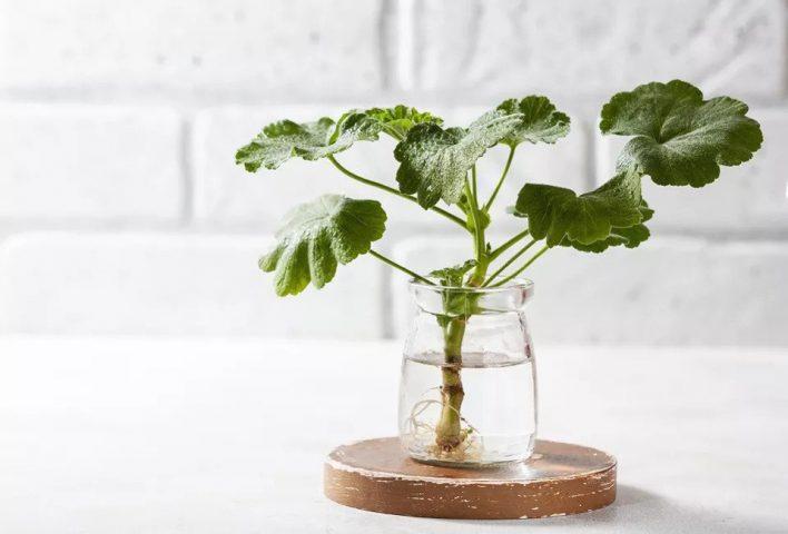 روش های تکثیر گیاهان