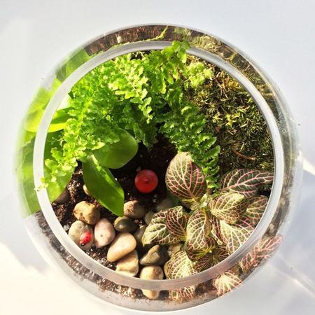 نگهداری از گیاهان داخل شیشه