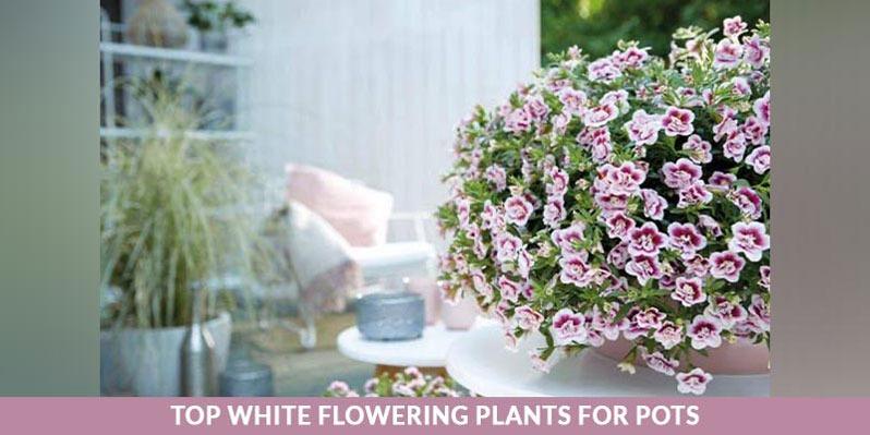 گلدان با گل سفید
