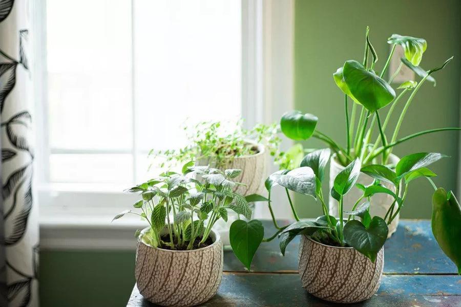 بهترین گیاهان خانگی