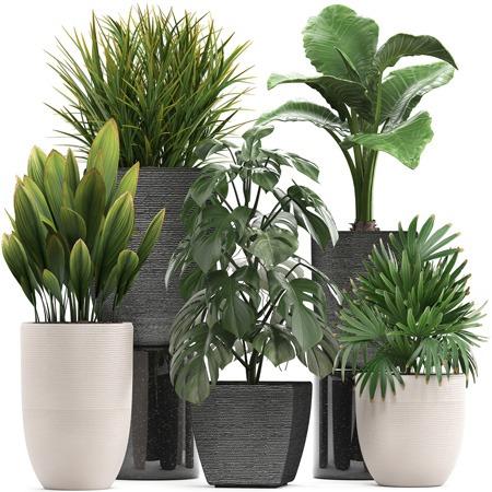 بهترین موقعیت های نور طبیعی برای گیاهان خانگی