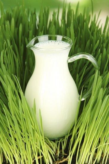مزایای کوددهی با شیر: نحوه استفاده از کود شیر در گیاهان