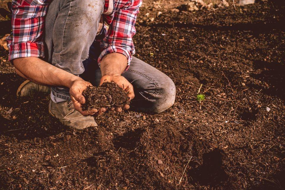 چند وقت یکبار خاک گلدان را عوض کنیم