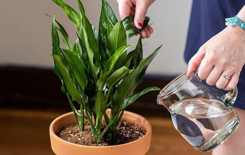 چگونه برگ گیاهان را پهن کنیم