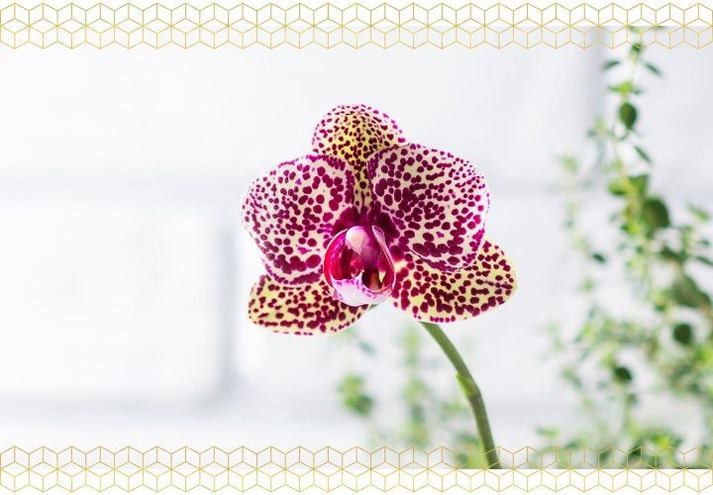 گل های ارکیده در سال چند بار گل می دهند
