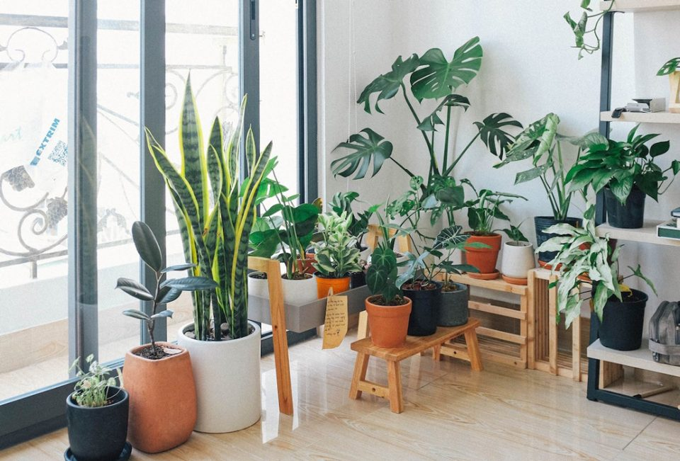 کود گیاهان آپارتمانی